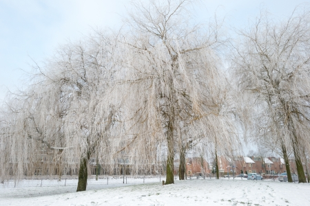 Trees in a snowy park along a lake Stock Photo - 17376845