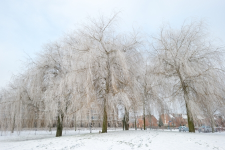 Trees in a snowy park along a lake Stock Photo - 17376537