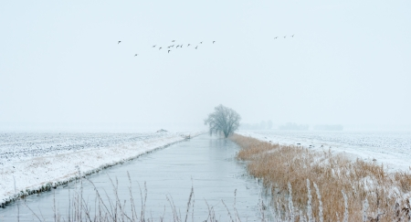Frozen reed along a canal in winter Stock Photo - 17376500
