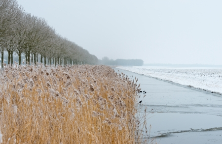 Frozen reed along a canal in winter Stock Photo - 17376522