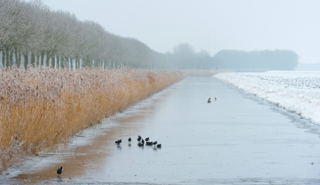 Birds walking on a frozen canal in winter Stock Photo - 17376508