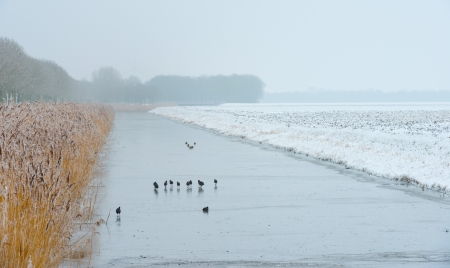 Birds walking on a frozen canal in winter Stock Photo - 17376519