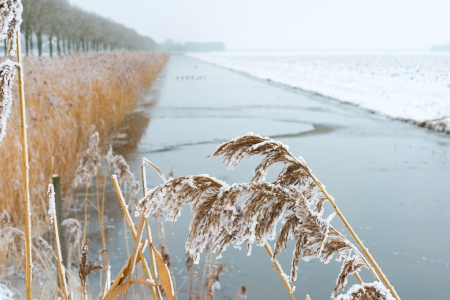 Frozen reed along a canal in winter Stock Photo - 17376510