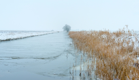 Frozen reed along a canal in winter Stock Photo - 17376509