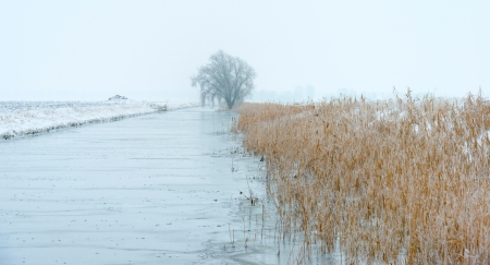 Frozen reed along a canal in winter Stock Photo - 17376504