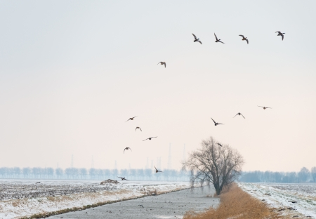 ice dam: Ducks flying over a snowy countryside