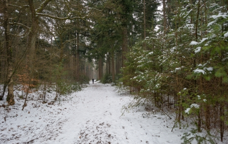 Woman hiking in a snowy forest photo