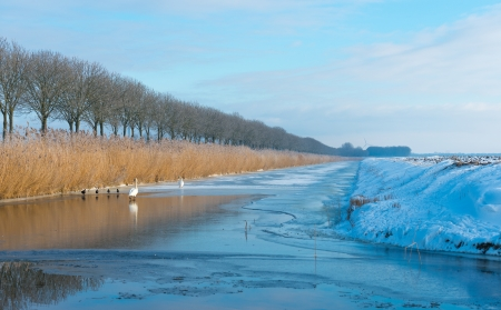 ice dam: Frozen snowy canal in winter