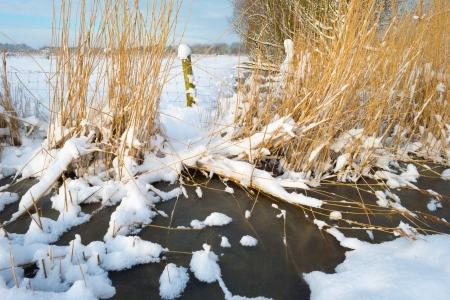 Snowy frozen countryside in sunlight photo