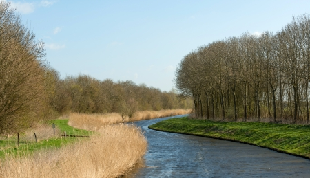 meandering: River meandering through a forest