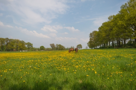 Two horses in a meadow in spring photo
