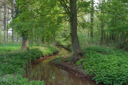 leuven: Stream meandering through meadow and forest