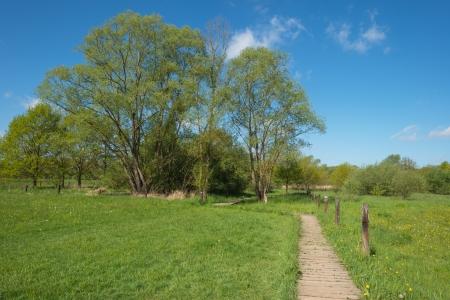 duckboards: Duckboards through a meadow in spring
