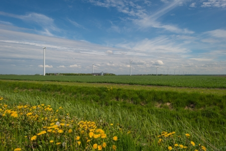 Windmills in a field in spring photo