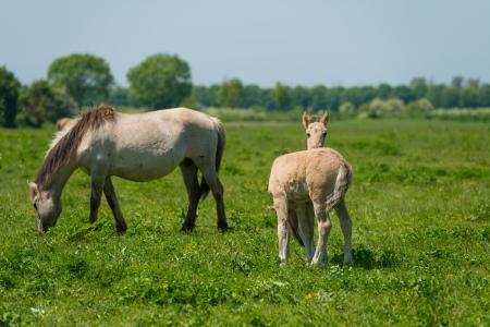 Foals and a horse in a sunny meadow photo