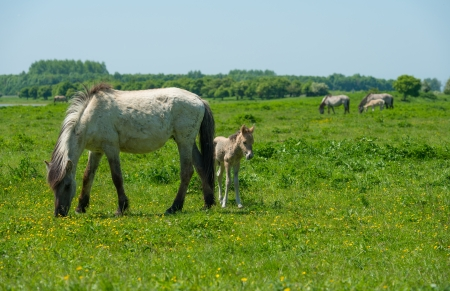 Foal and its mother in a sunny meadow photo