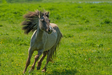 Wild horse running in a sunny meadow 스톡 콘텐츠
