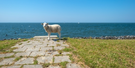 Sheep standing on top of a dam along a lake photo