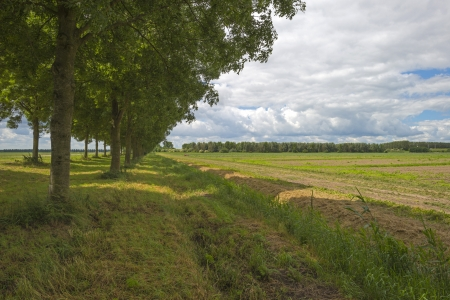 Double row of trees in the countryside photo