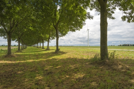 double reed: Double row of trees in the countryside