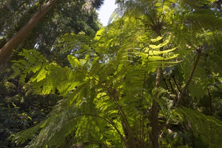fern  large fern: Huge ferns in a sunlit forest in summer