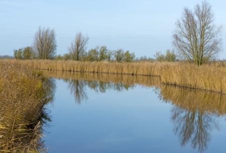 windless: Reed along a windless river at fall