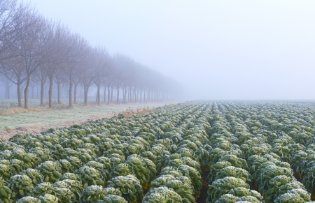 Vegetables covered with hoarfrost at fall Stock Photo