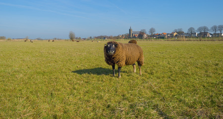 Sheep in front of the skyline of an ancient village Stock Photo - 26547073