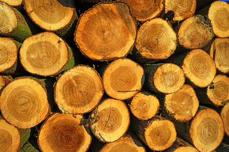 Stack of wood in sunlight in winter photo