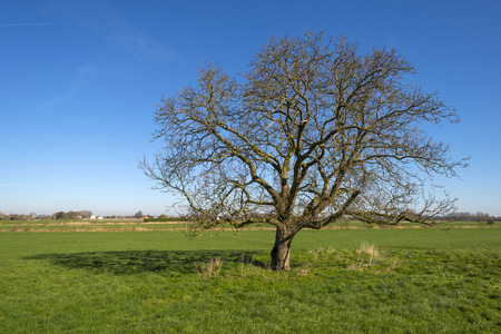 Tree in a meadow under a clear sky photo