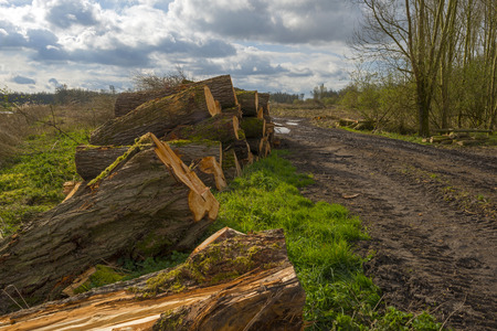 flevoland: Stack of wood in a field in a cloudy spring Stock Photo