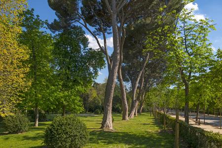 Retiro Park in Madrid in spring