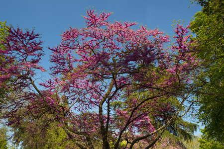 colorful tree: Colorful tree in the Retiro Park in Madrid
