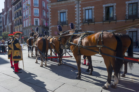 Team of horses before a carriage in Madrid