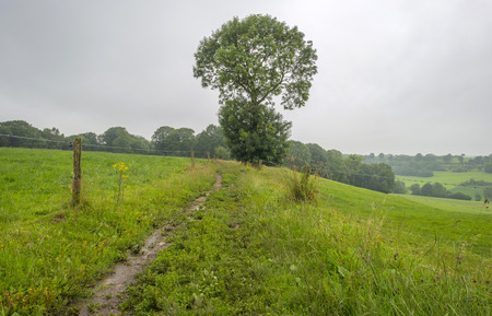 dirt road recreation: Footpath along a meadow in summer