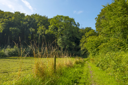 dirt road recreation: Footpath through meadow and trees in summer
