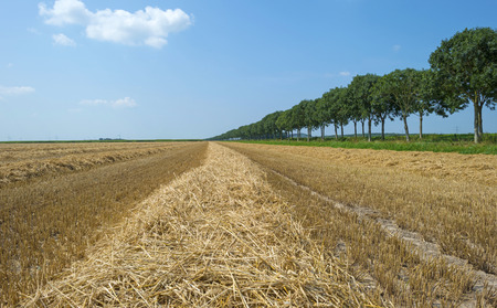 flevoland: Corn harvested from a field in summer
