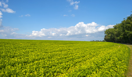 Vegetables growing on a field in summer photo