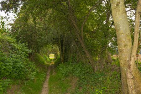 cutting through: Cutting through a forest in summer