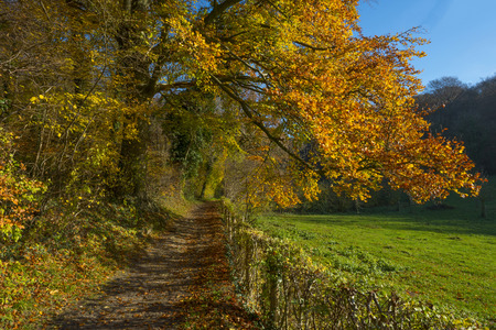 Track along a forest at sunset in autumn photo