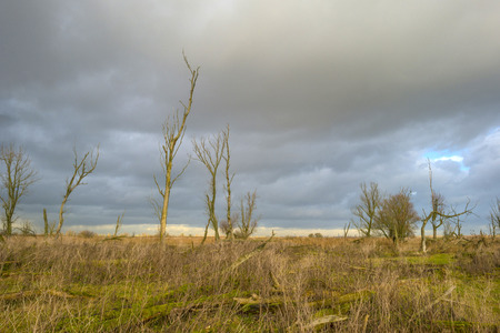 deteriorating: Deteriorating weather over nature in autumn