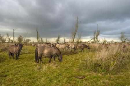 deteriorating: Deteriorating weather over horses in autumn