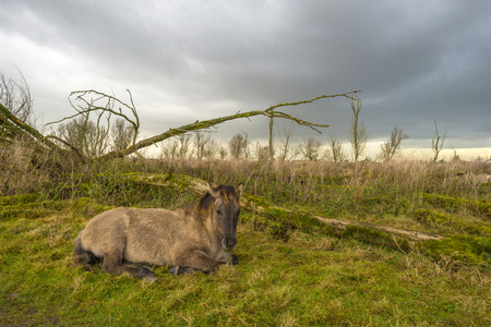 deteriorating: Deteriorating weather over a horse in autumn