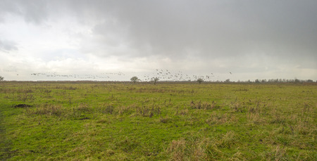 deteriorating: Geese flying into deteriorating weather at fall