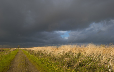 Deteriorating weather over a footpath along reed at fall photo