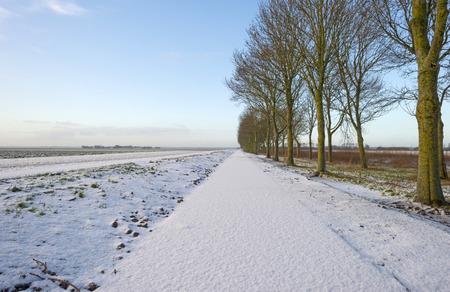flevoland: Row of trees along a snowy road in winter Stock Photo
