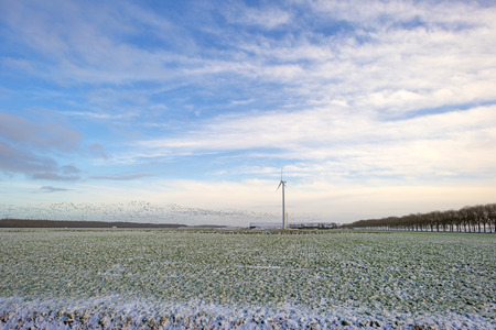 Flock of geese flying over a snowy field in winter photo