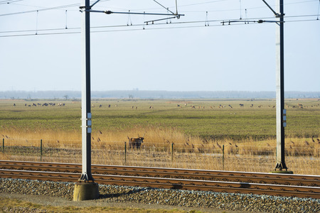 Herd of large herbivores along a railroad photo
