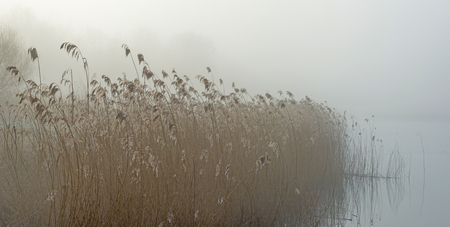 flevoland: Misty shore of a lake at sunrise in winter Stock Photo