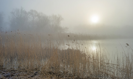 Misty shore of a lake at sunrise in winter photo